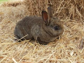 Rabbits in San Antonio
